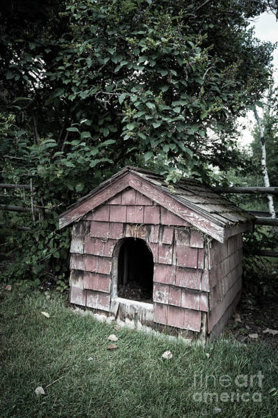 Photograph - In The Dog House by Edward Fielding