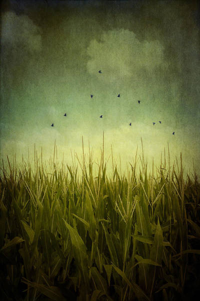 Wall Art - Photograph - In The Field by Trish Mistric