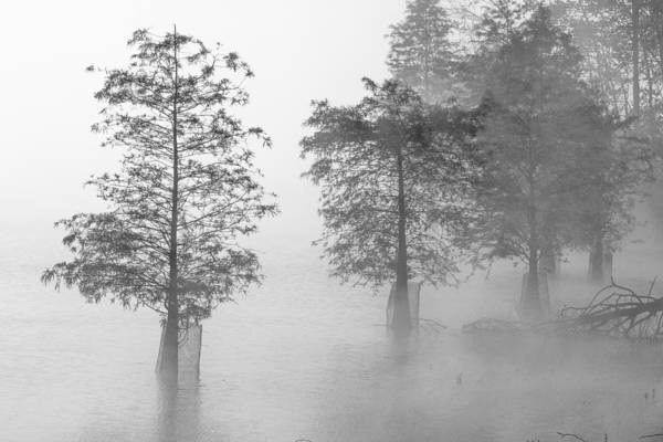 Photograph - In The Fog 03 Bw by Jim Dollar