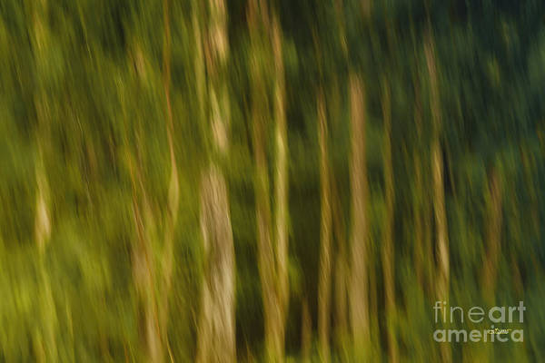 Photograph - In The Forest by Jutta Maria Pusl
