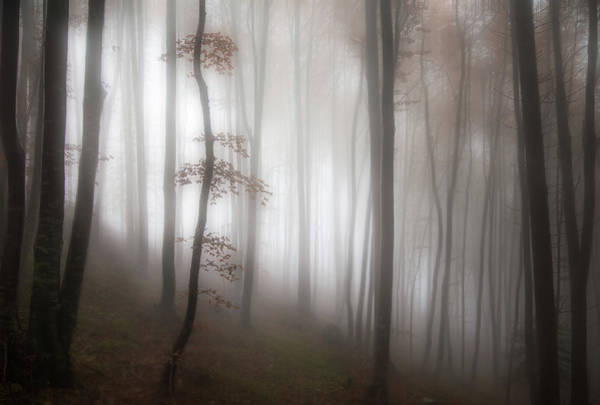 Wall Art - Photograph - In The Forest..... by Michel Manzoni