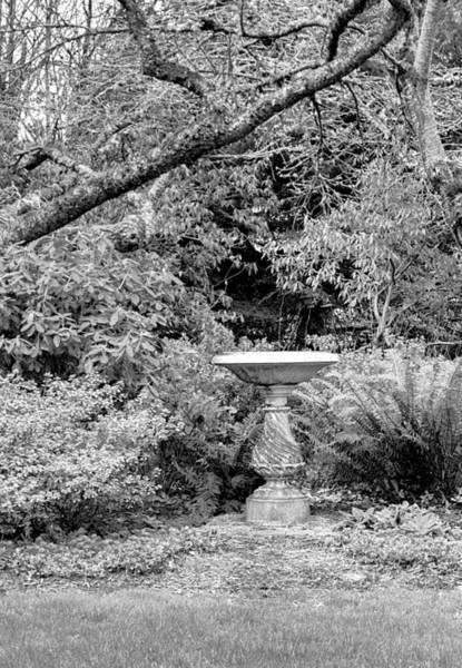 Photograph - In The Garden by HW Kateley