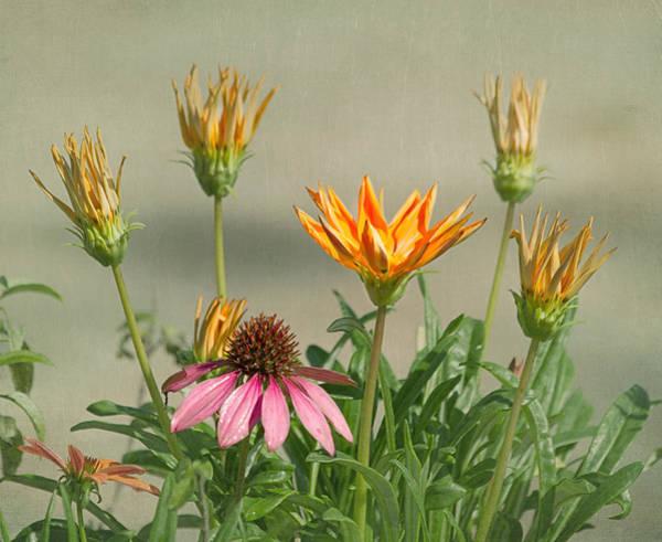Photograph - In The Garden by Kim Hojnacki
