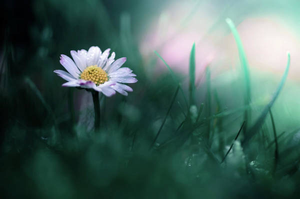 Garden Photograph - In The Garden Of My Heart by Maxime Dugenet