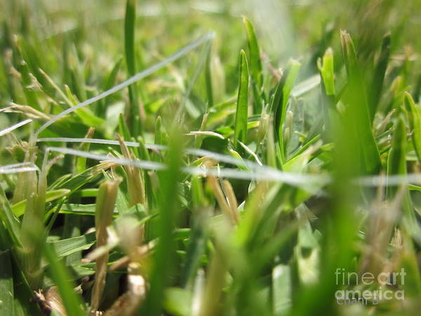 Photograph - In The Grass by Chani Demuijlder