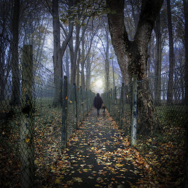 Dog Walker Photograph - In The Lane by Janet Meehan