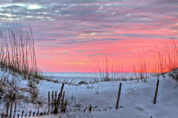 Photograph - In The Light Of Dawn by JC Findley