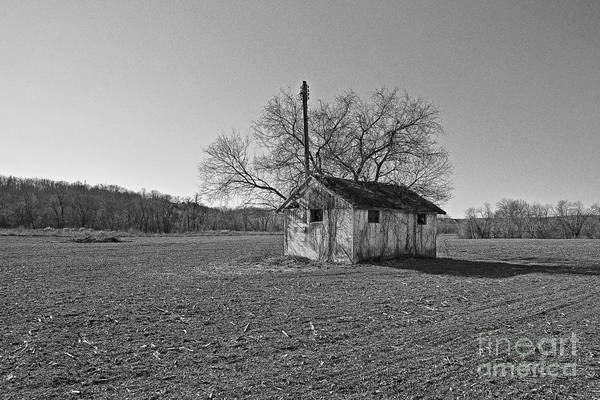 Wall Art - Photograph - In The Middle Of The Field by Zbigniew Krol