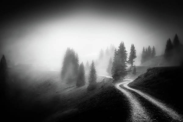 Pine Trees Photograph - In The Mountains by Nic Keller