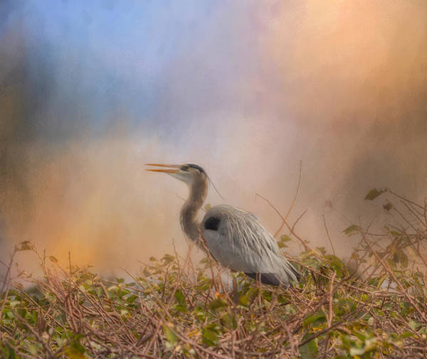Wall Art - Photograph - In The Nest - Great Blue Heron by Kim Hojnacki