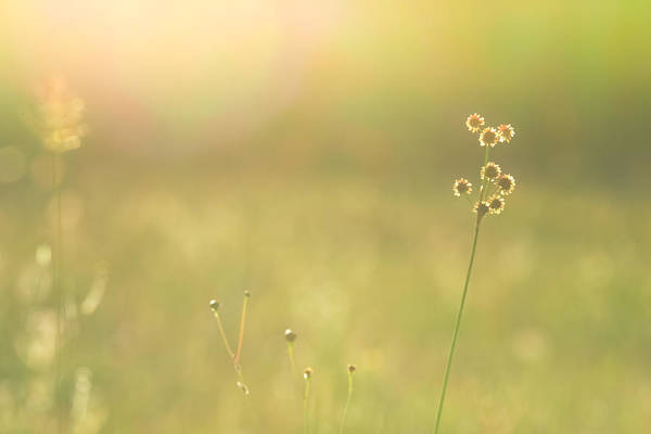 Photograph - In The Open Meadow by Melanie Moraga
