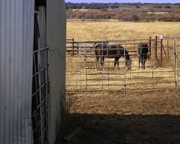 Photograph - In The Pasture 24684 by Jerry Sodorff