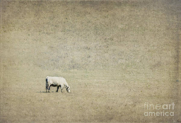 Wall Art - Photograph - In The Pasture by Elena Nosyreva