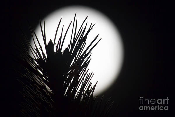 Photograph - In The Pines by Jim Garrison