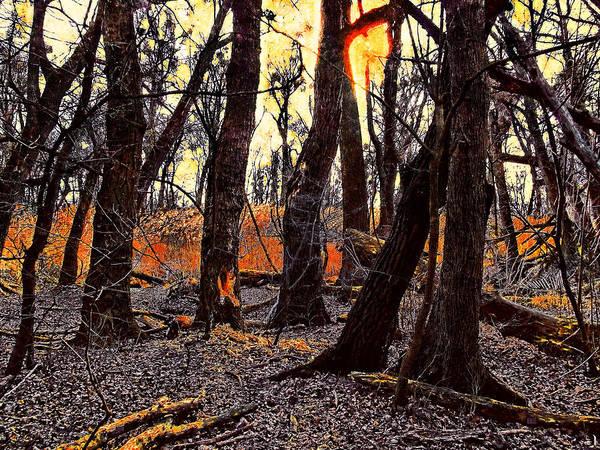 Photograph - In The Prater Woods by Menega Sabidussi