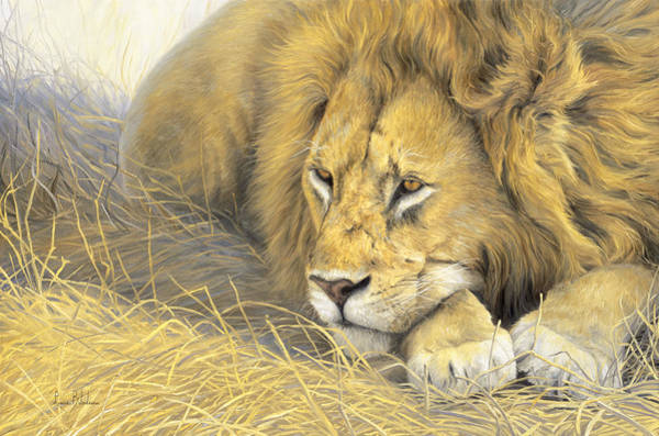 Lions Painting - In The Shade by Lucie Bilodeau