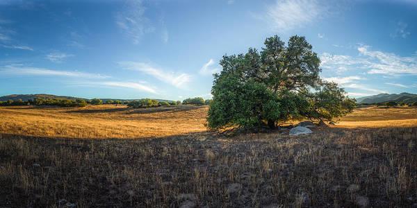 Coast Live Oak Photograph - In The Shade Of An Oak by Alexander Kunz