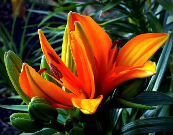Outstanding Photograph - In The Tropics by Karen Wiles