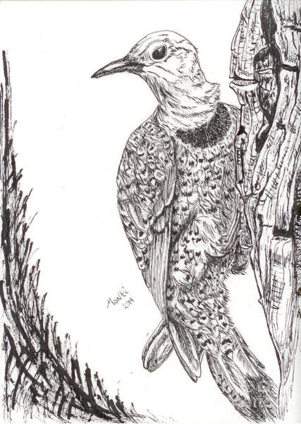 Northern Flicker Painting - In The Wind by Monti Bargsley