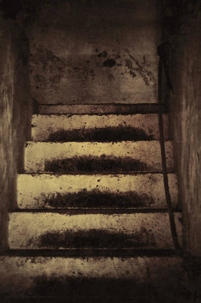 Wall Art - Photograph - In Their Footsteps by Odd Jeppesen