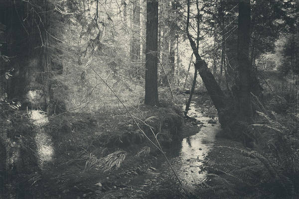Redwoods Photograph - In This Silence by Laurie Search