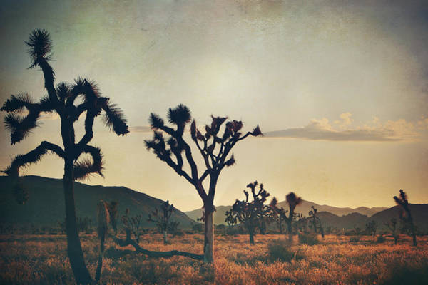 Joshua Tree National Park Wall Art - Photograph - In Your Arms As The Sun Goes Down by Laurie Search