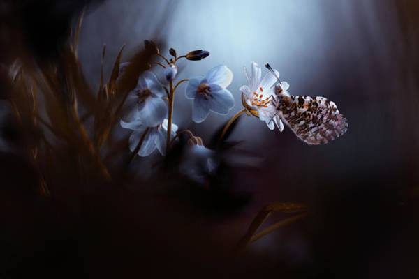 Butterflies Photograph - In Your Dreams, Everything Is Alright by Artistname