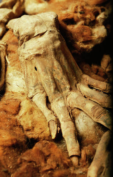 Lima Photograph - Inca Mummy's Hand by Pasquale Sorrentino/science Photo Library