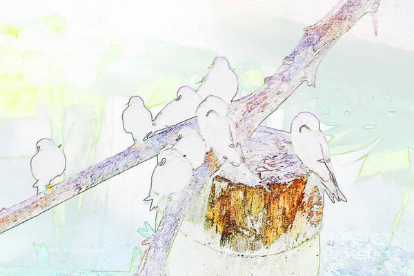 Inca Terns Art Print