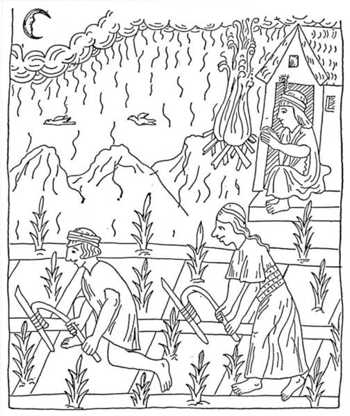 Indian Corn Drawing - Incan Cultivation by Granger
