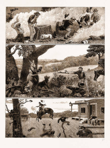 Kangaroo Drawing - Incidents In A Settlers Life In Australia by Litz Collection