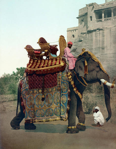 Wall Art - Painting - India Elephant, C1900 by Granger