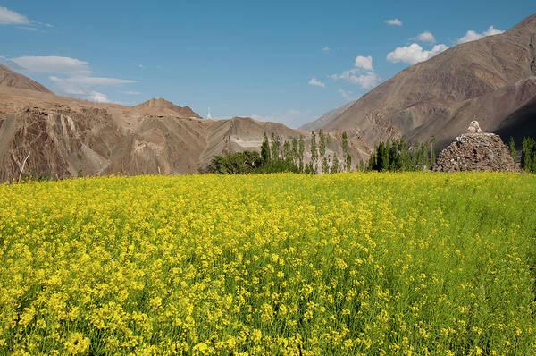 Clark Photograph - India, Jammu & Kashmir, Ladakh, A Field by Ellen Clark