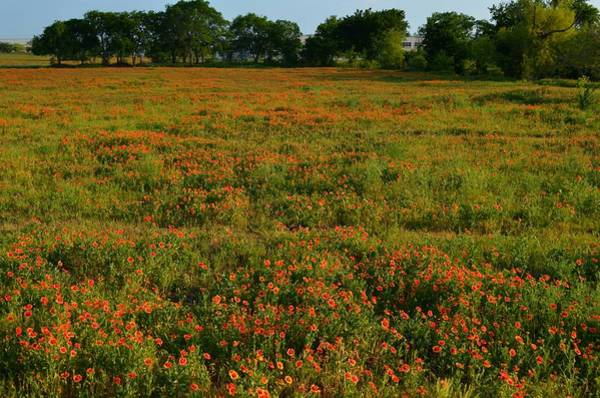 Photograph - Indian Blanket Field by Ricardo J Ruiz de Porras