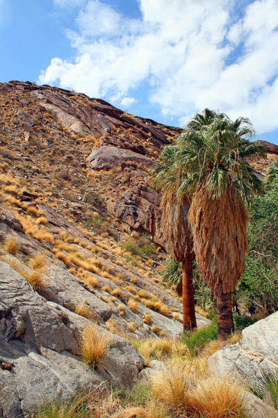 Photograph - Indian Canyons View With Two Palms by Ben and Raisa Gertsberg