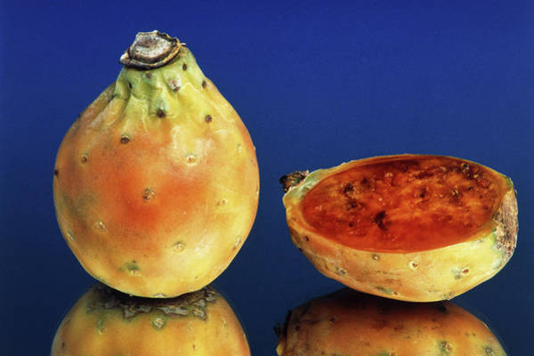 Foodstuff Photograph - Indian Figs by Th Foto-werbung/science Photo Library