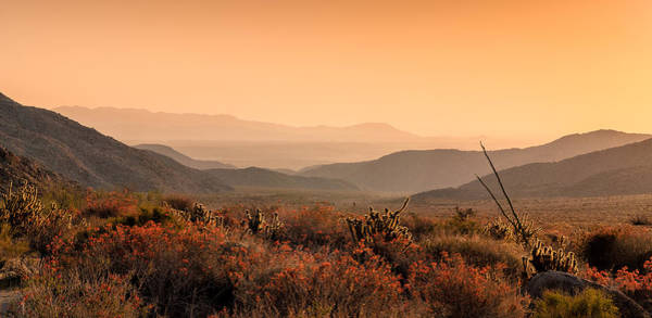 Desert Flowers Photograph - Indian Gorge Sunrise by Joseph Smith