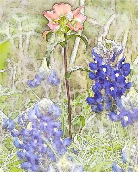 Texas Bluebonnet Digital Art - Indian Paintbrush And Bluebonnets by Jeanne A Martin