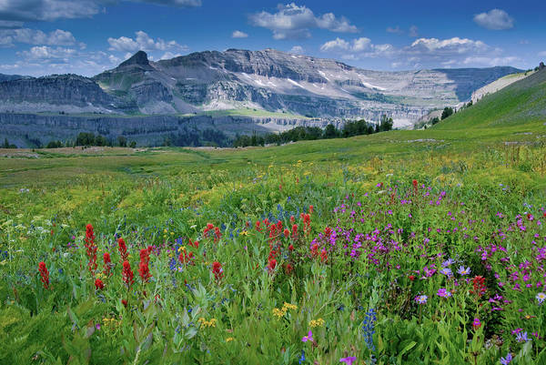 Monkey Flower Wall Art - Photograph - Indian Paintbrush And Monkeyflowers by Howie Garber