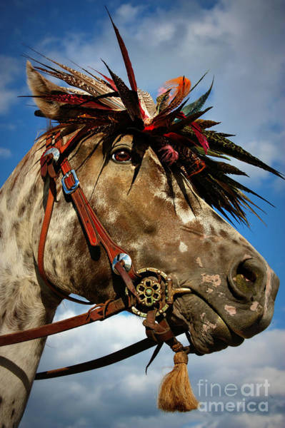 Wall Art - Photograph - Indian Parade Pony by Scarlett Images Photography