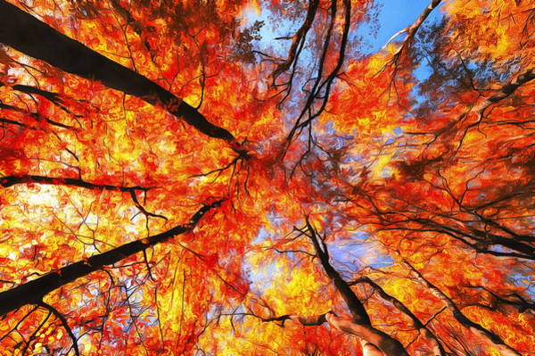 Photograph - Indian Summer Digital Art Red Trees In Fall by Matthias Hauser