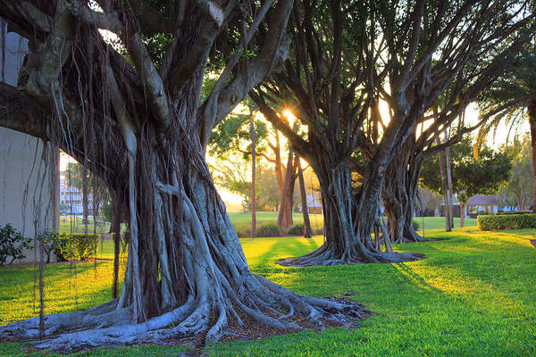 Indian Banyan Photograph - Indian Sunset by Iryna Goodall