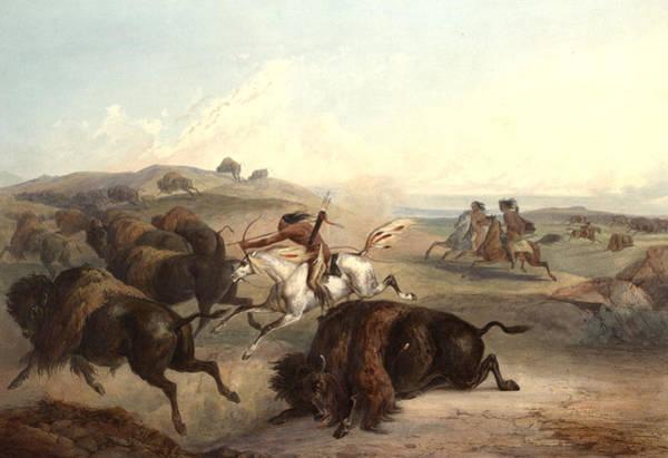 Horse Feathers Digital Art - Indians Hunting The Bison by Karl Bodmer