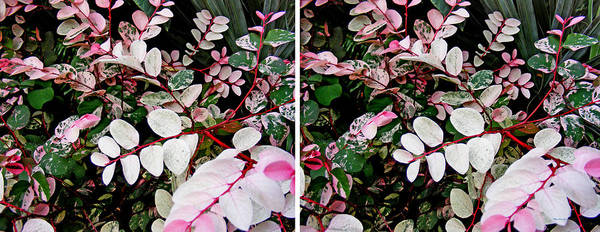 Photograph - Indigo Plant In Stereo by Duane McCullough