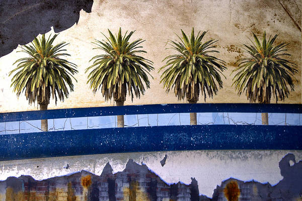 Wall Art - Photograph - Indio by Carol Leigh