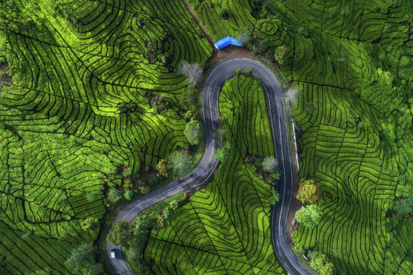 Wall Art - Photograph - Indonesia - Rancabali Tea Aerial by Jean Claude Castor