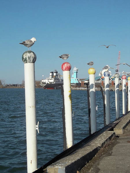 Photograph - Industrial Bay Sunny Lake Erie Day by Anne Cameron Cutri