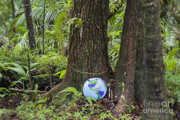 Photograph - Inflatable Globe In Rainforest by Bryan Mullennix