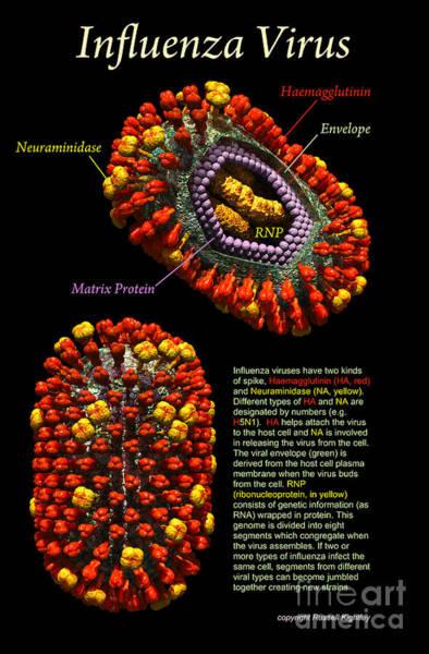 Digital Art - Influenza Virus Poster Black by Russell Kightley