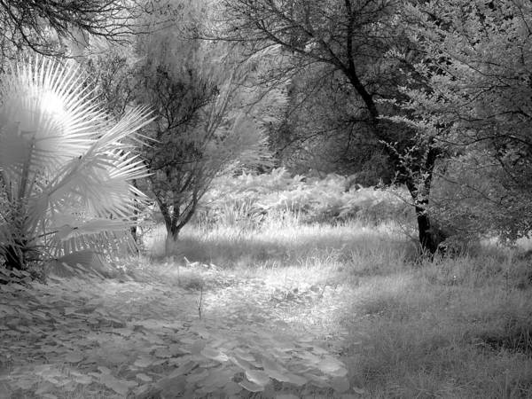 Photograph - Infrared 3 by Mauro Celotti